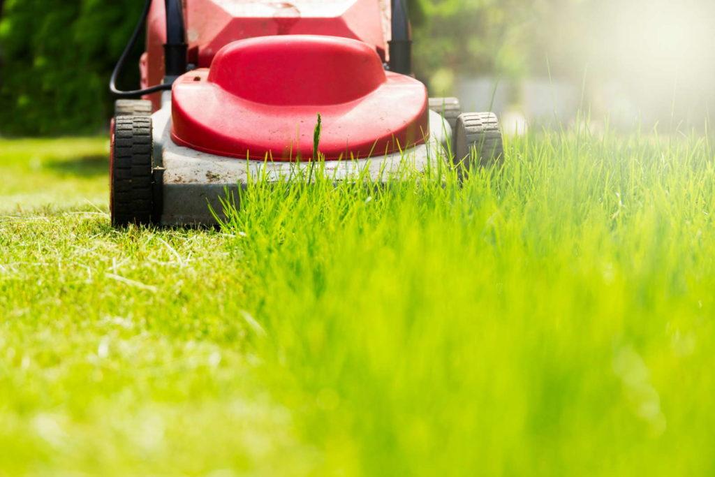 Rasen mit rotem Rasenmäher im Garten