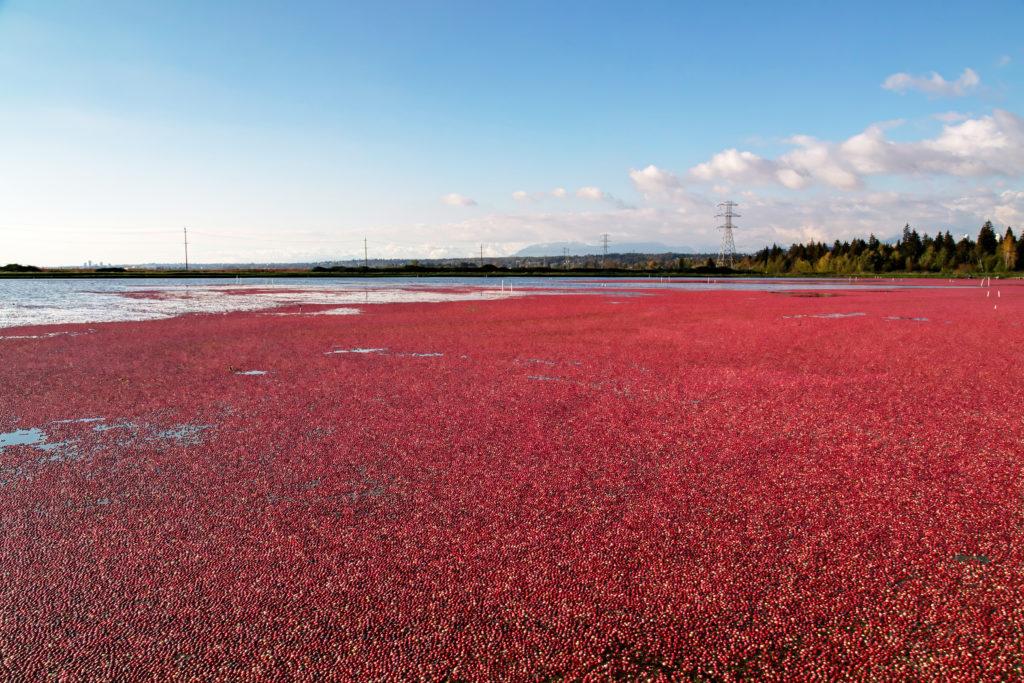 See mit schwimmenden Beeren auf der Oberfläche