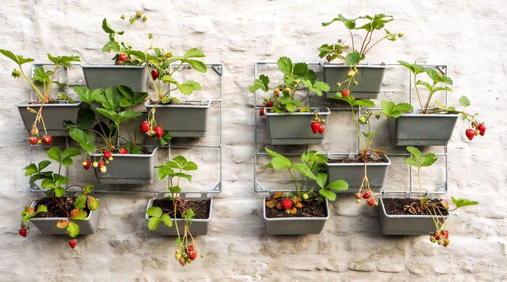 Erdbeeren vertikale Begrünung Balkonkästen