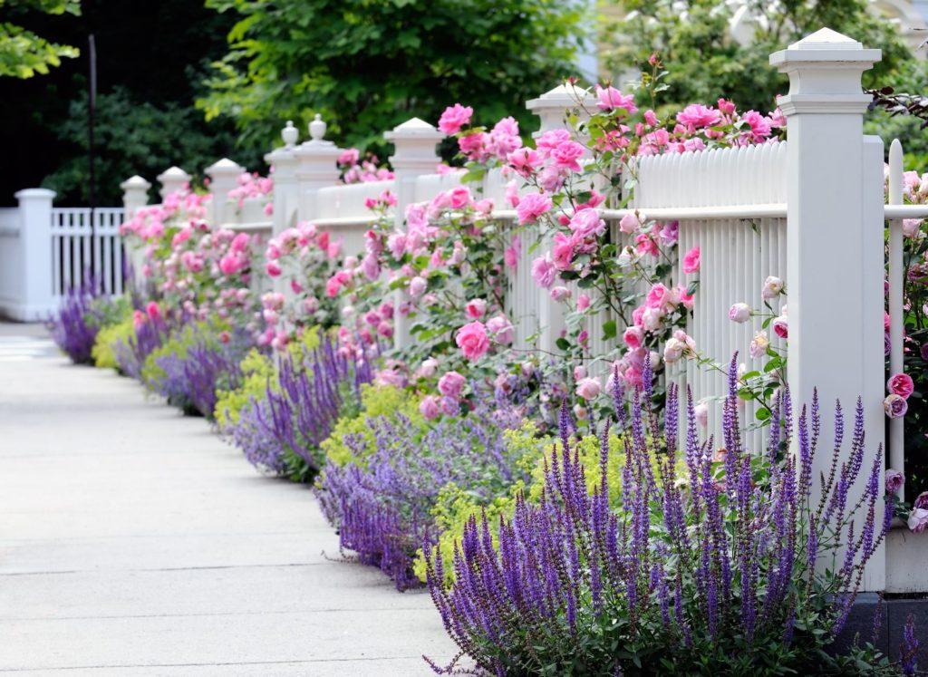 Zaun mit Blumen