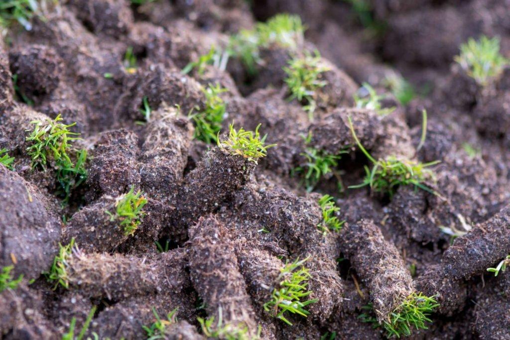 Erdkegel nach Belüftung des Rasens
