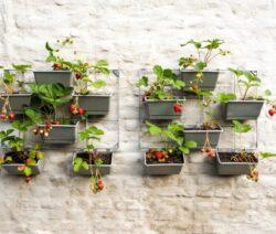 Vertikaler Garten Erdbeeren