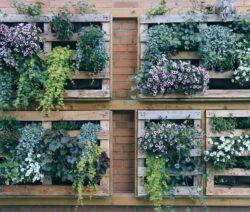 Vertikaler Garten Blumen