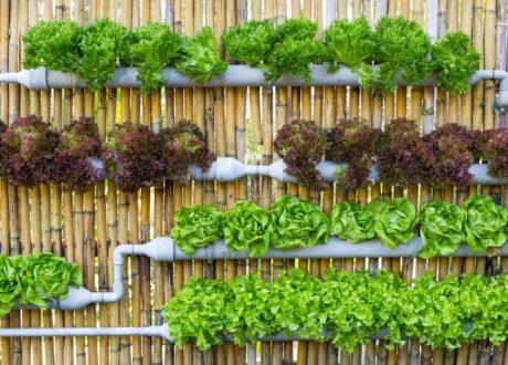 Vertikaler Garten Salat