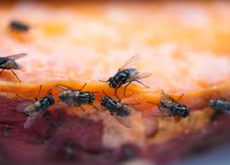 Fliegen Sitzen Auf Essen