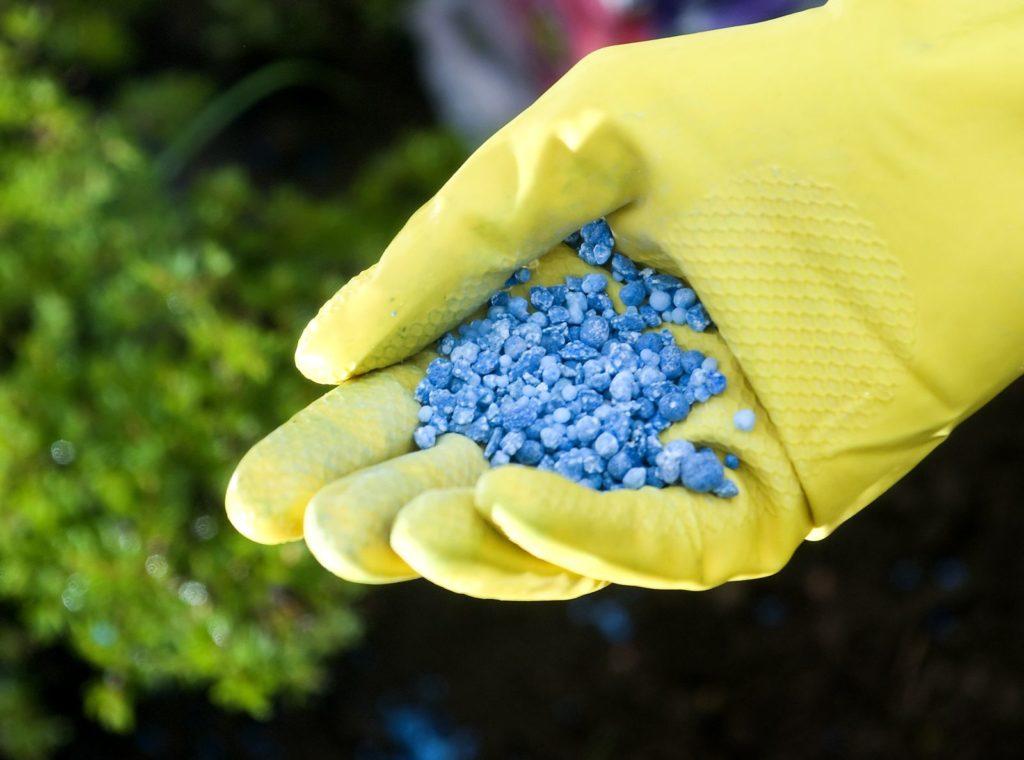 Gelber Handschuh mit Blaukorn Dünger