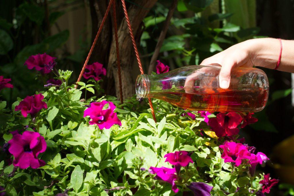 Blumen werden mit einer Glasflasche gegossen