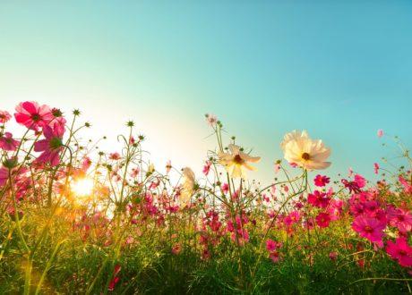 Blumenwiese In Der Sonne