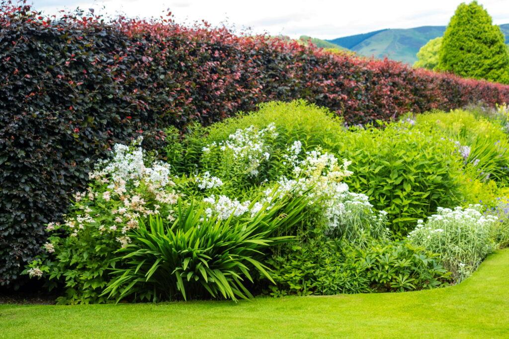 Pflanzen als Sichtschutz: Unsere Top 15 für Garten & Balkon ...
