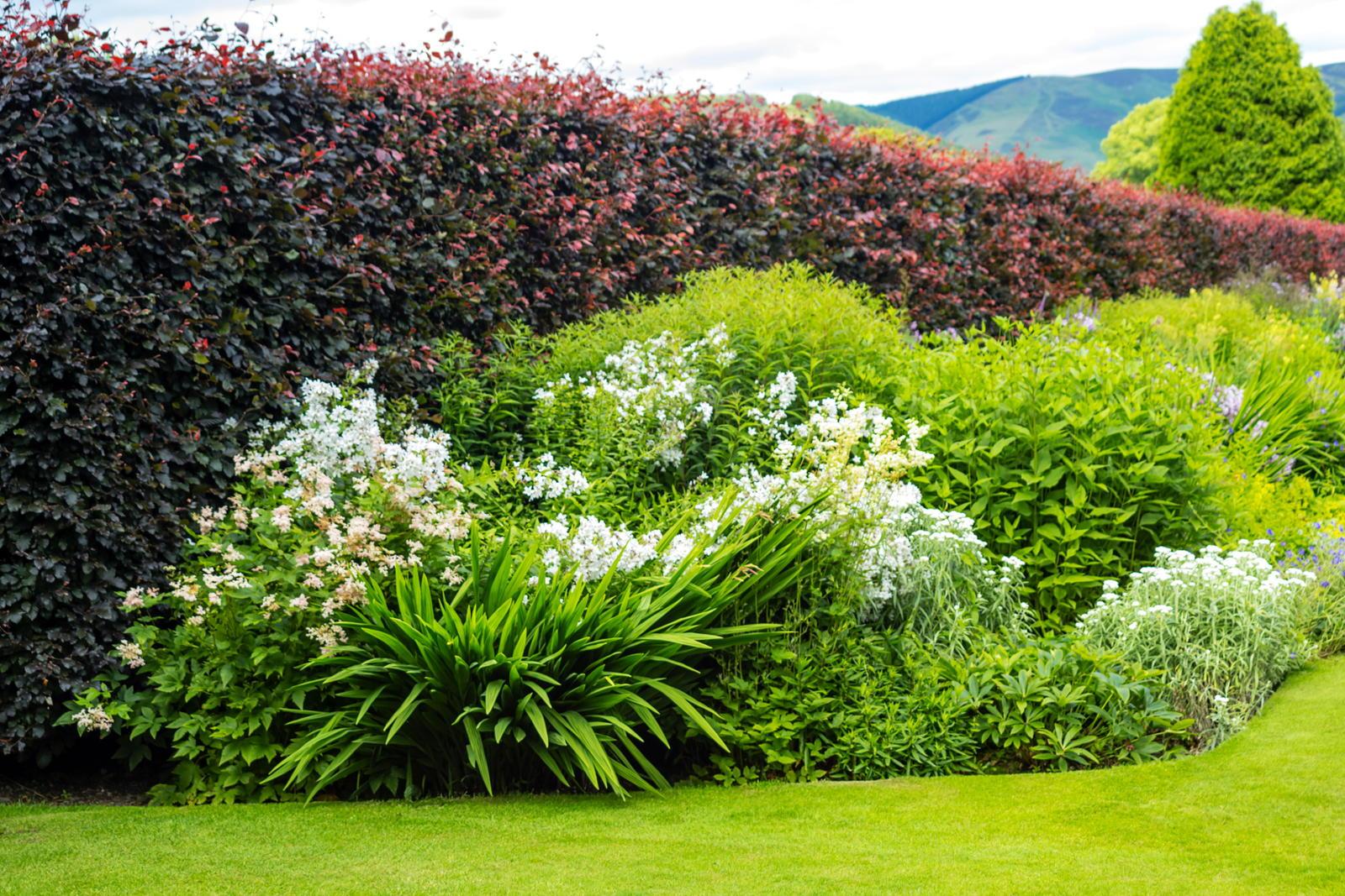Pflanzen Als Sichtschutz Fur Garten Balkon Plantura