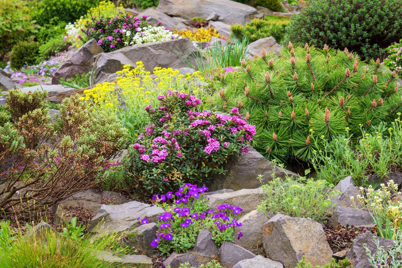 pflanzen f r den steingarten unsere top 10 plantura. Black Bedroom Furniture Sets. Home Design Ideas