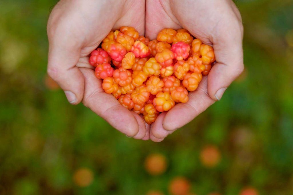 Cloudberries in der Hand herzform