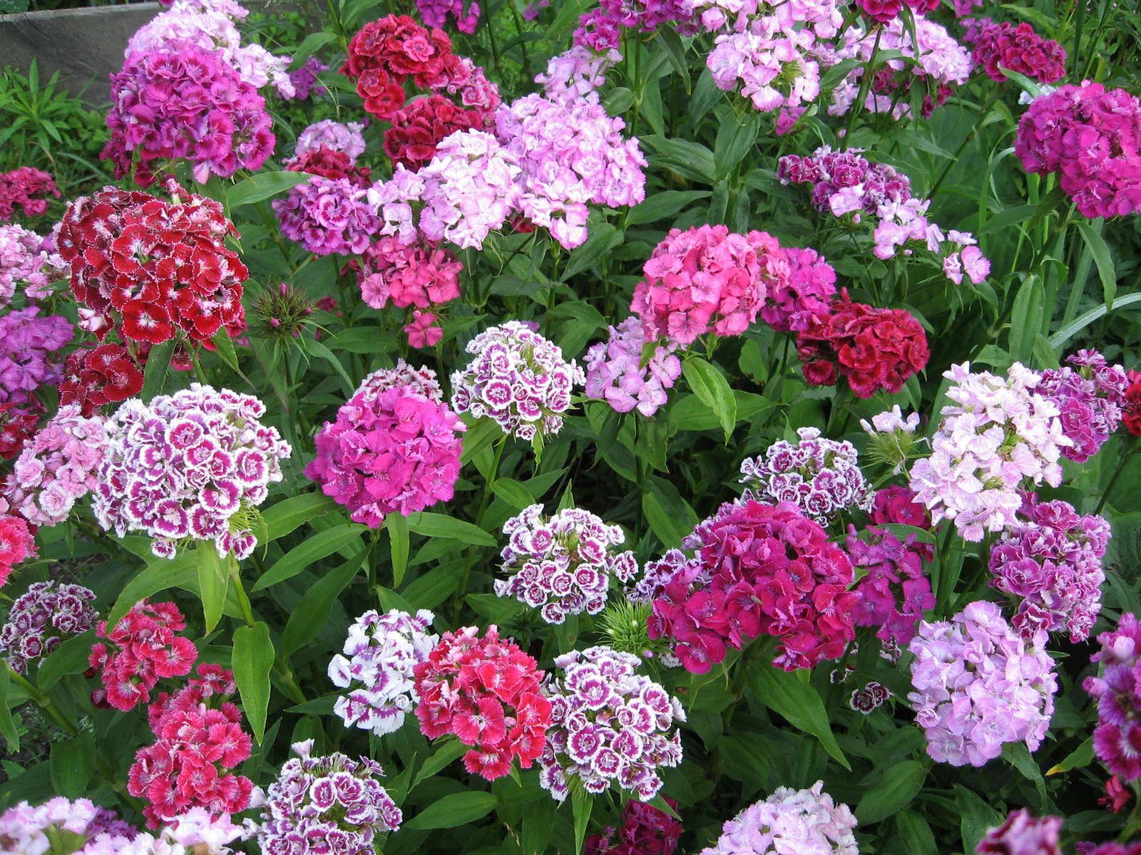 Prächtig Schneckenresistente Pflanzen: Blumen, Stauden & Gemüse - Plantura &WA_79