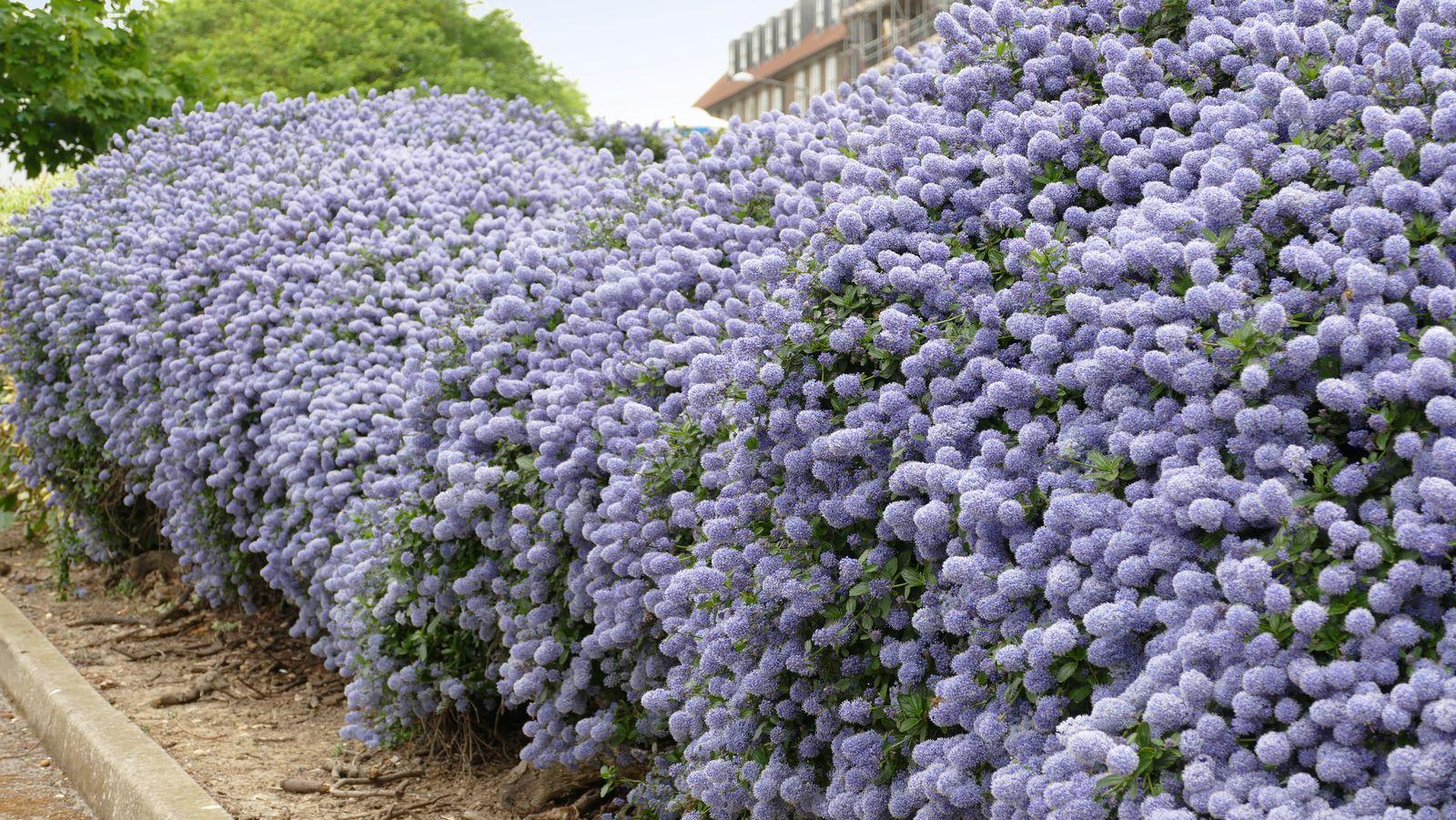 Pflanzen Als Sichtschutz: Unsere Top 15 Für Garten