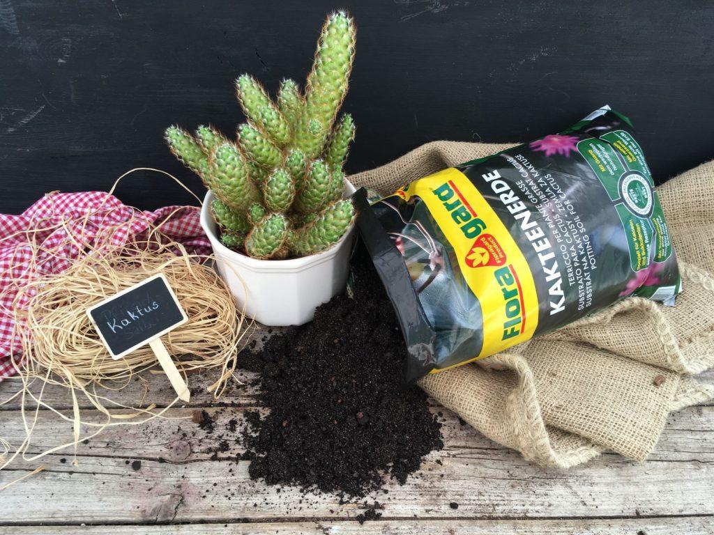Kakteen & Sukkulenten richtig pflegen Überblick   Plantura
