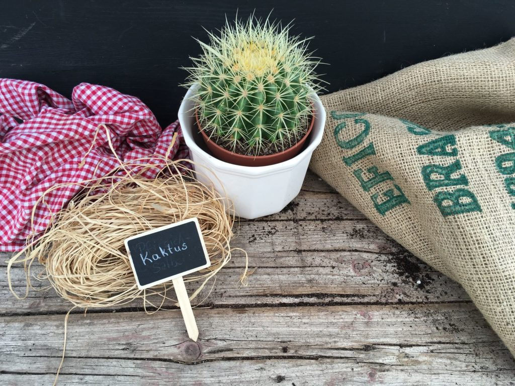 Kaktus auf Holz mit Schild