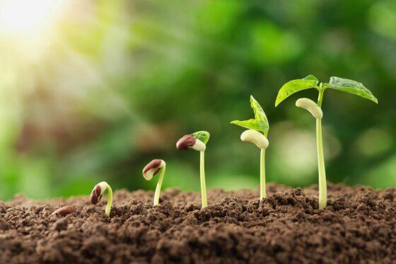Licht- und Dunkelkeimer: Unterschiede & Liste mit Pflanzen