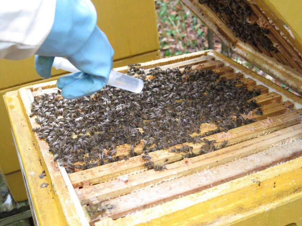 Ein Imker bringt Säure in seinen Bienenstock