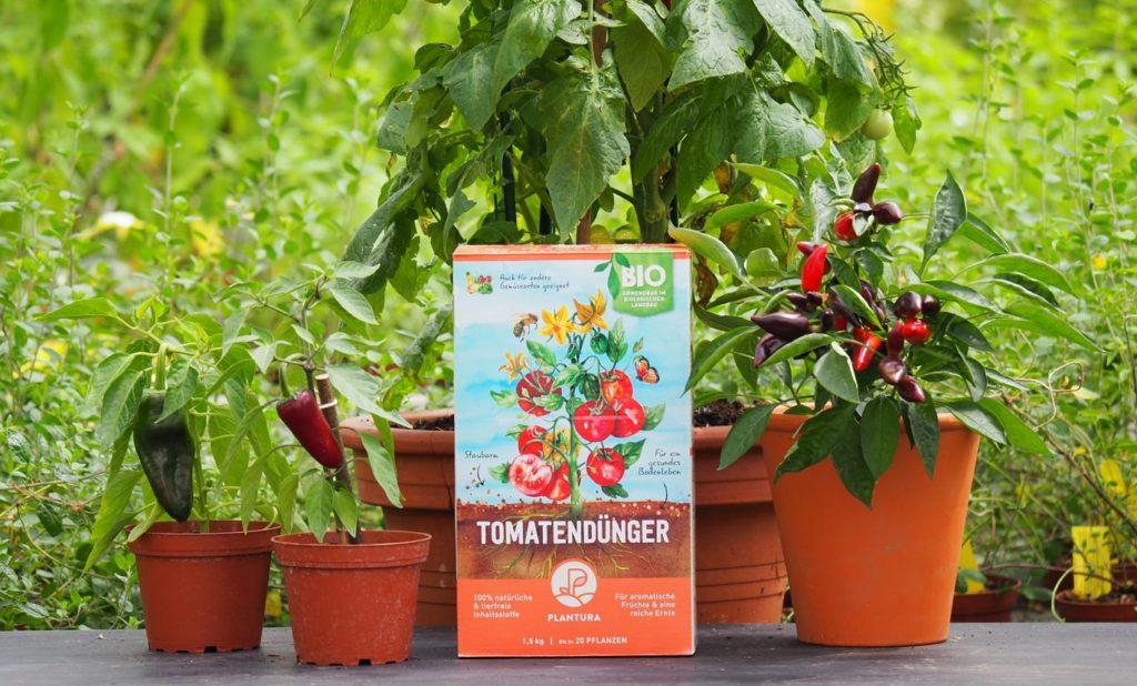 Düngerbox mit Tomatenpflanzen