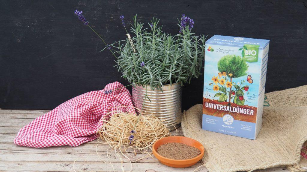 Plantura-Universaldünger mit Lavendel vor schwarzem Hintergrund
