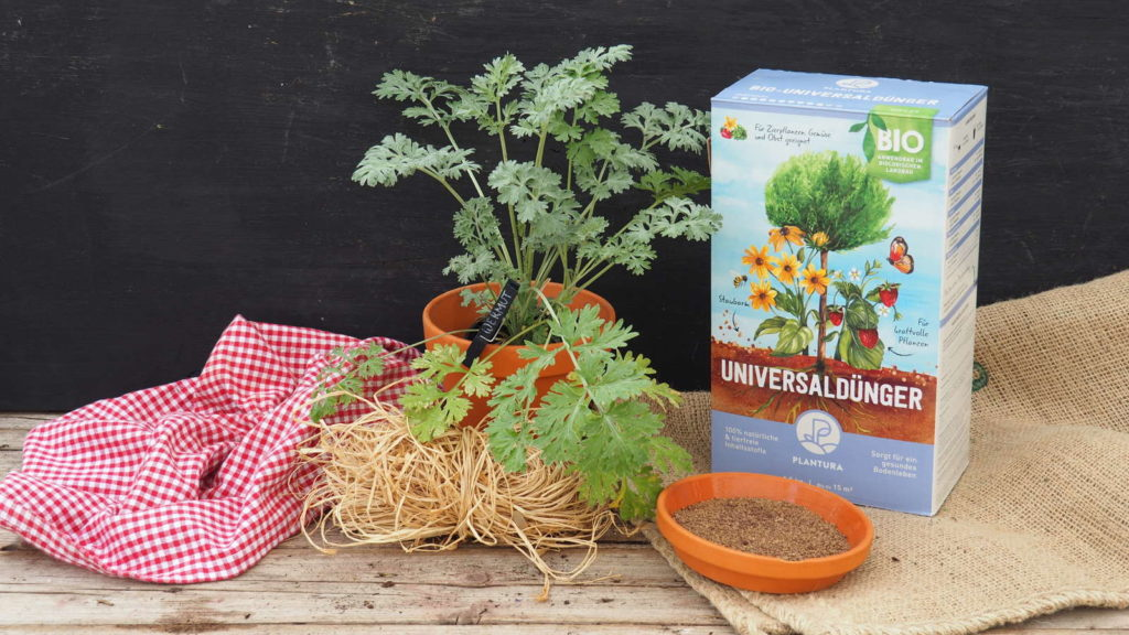 Wermutkraut im Topf mit Plantura Bio-Universaldünger