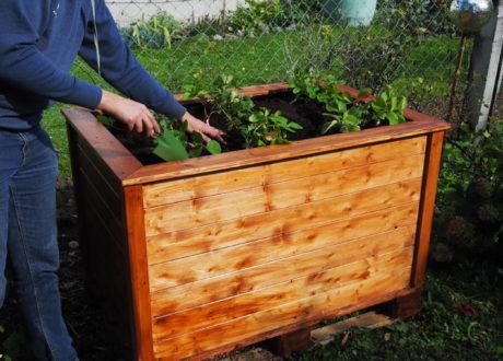 Hochbeet Mit Erdbeerpflanzen Im Garten