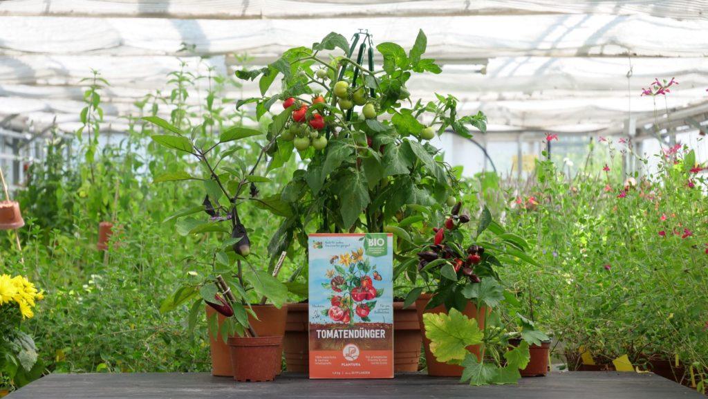 Düngerbox umgeben von Tomatenpflanzen