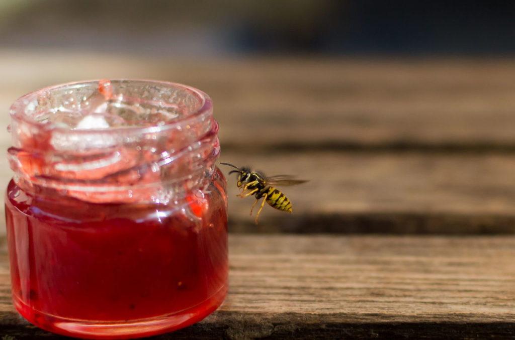 Wespe an Marmelade