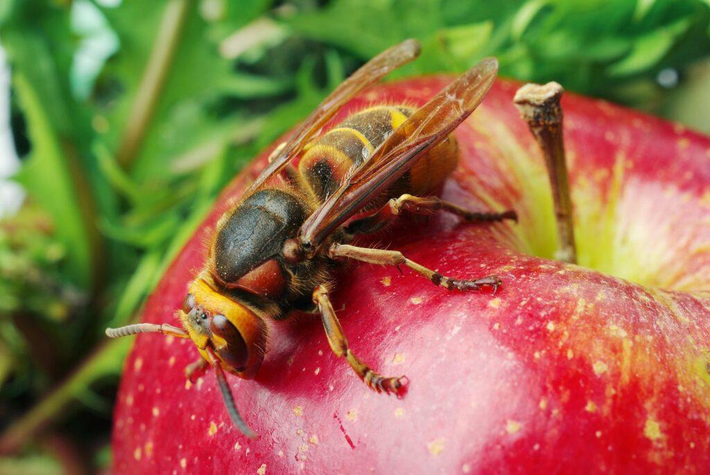 Pflanzen Gegen Wespen Was Hilft Wirklich Plantura