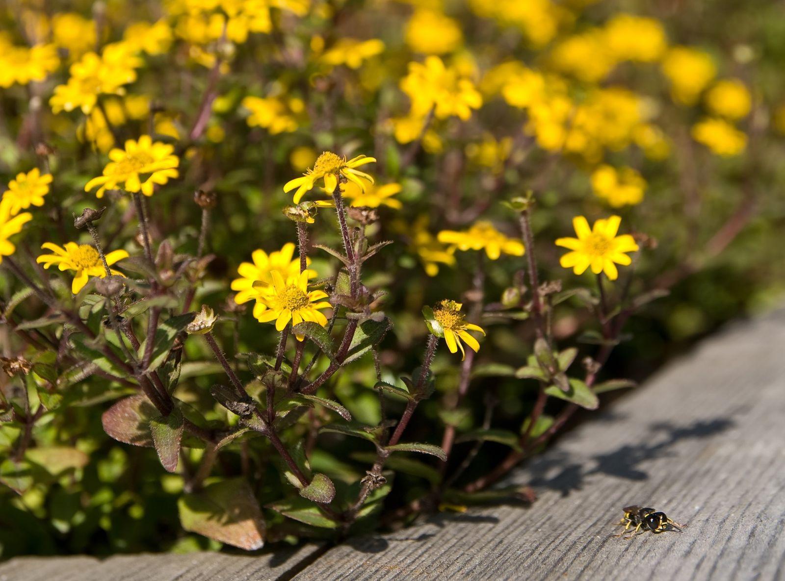 Pflanzen Fur Die Pralle Sonne Die Top 10 Fur Garten Balkon Plantura