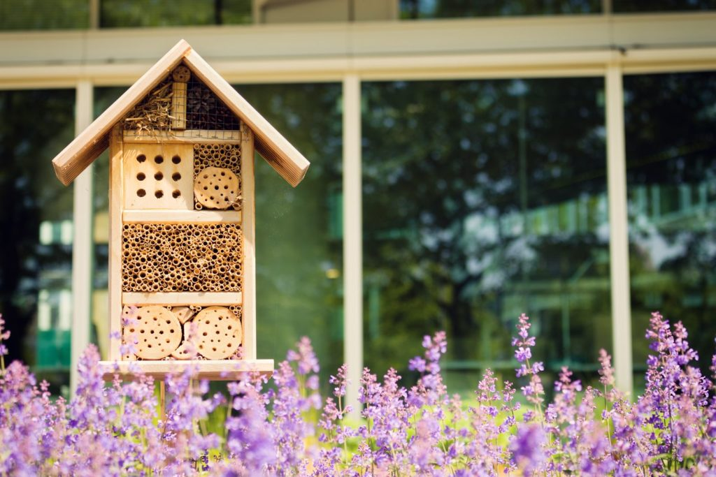 Insektenhotel mit Blüten im Vordergrund