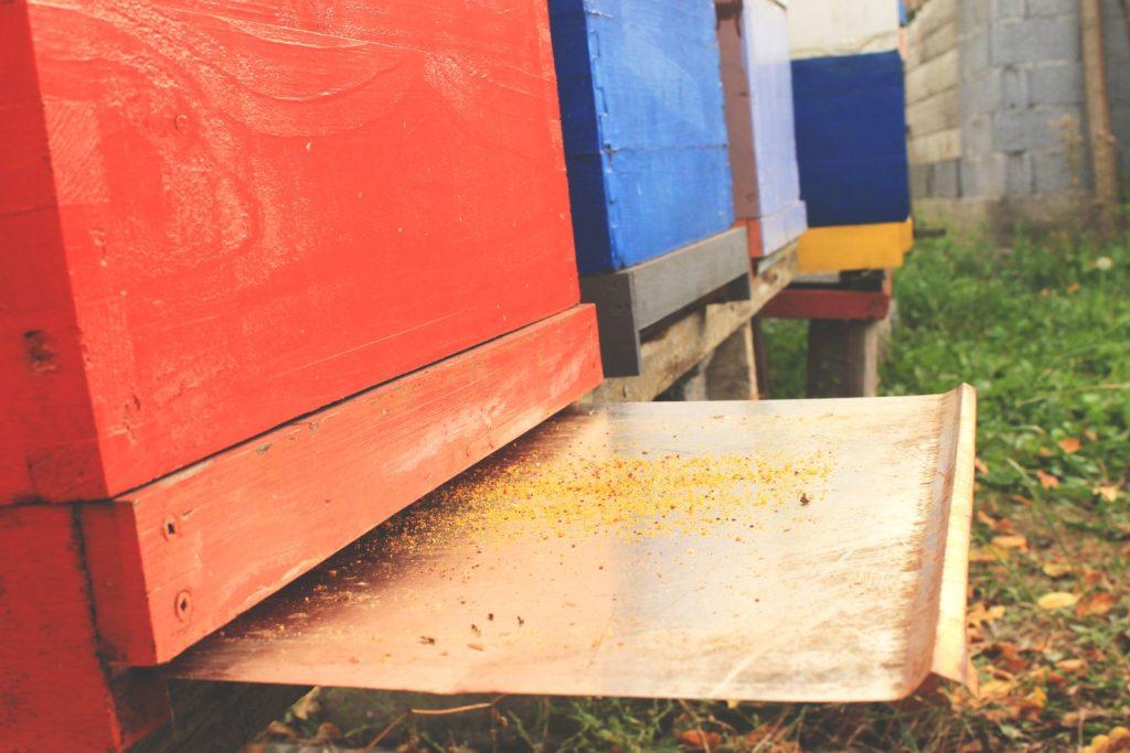 Offener Unterboden unter einem Bienenstock