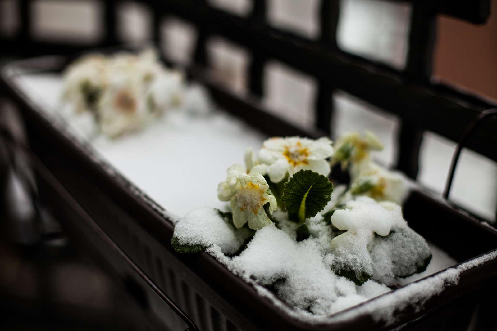 Winterharte Balkonpflanzen Robuste Pflanzen Fur Den Balkon