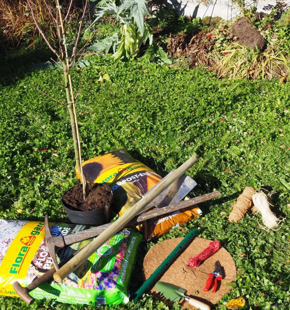 Birnbaum im Topf vor Dünger und Werkzeugen im Garten