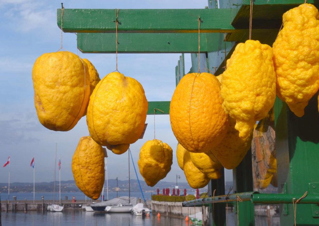 Gelbe Cedri am Hafen