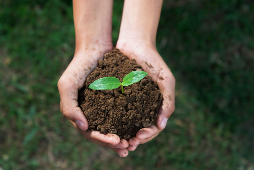 Erde mit Pflanze wird gehalten