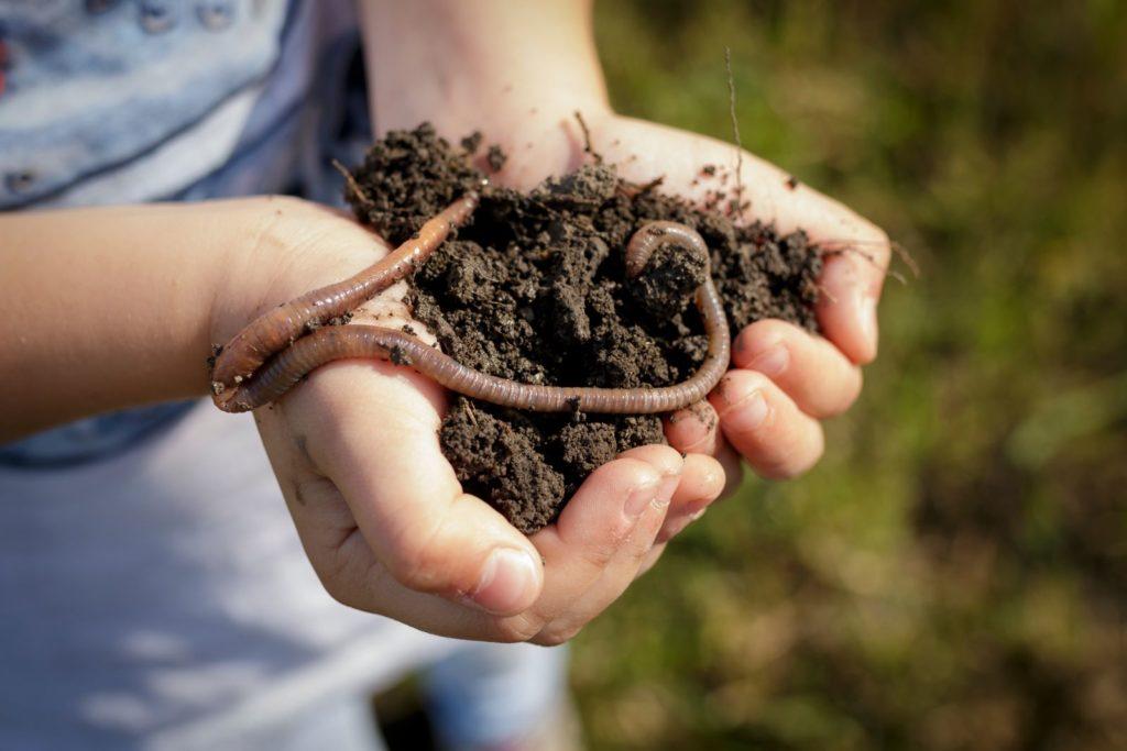 Erde mit Wurm