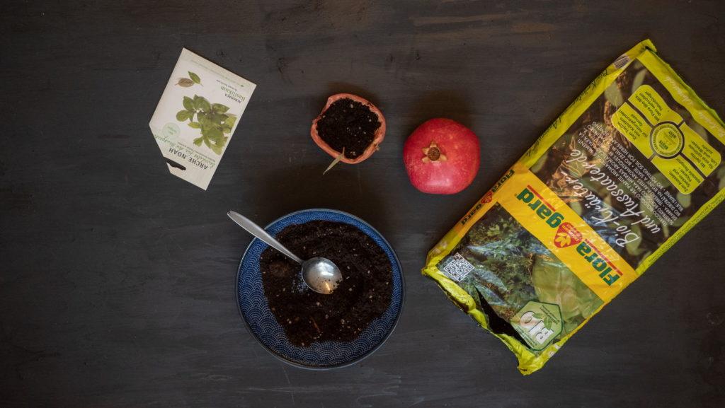 Granatapfel Aussaatgefäß