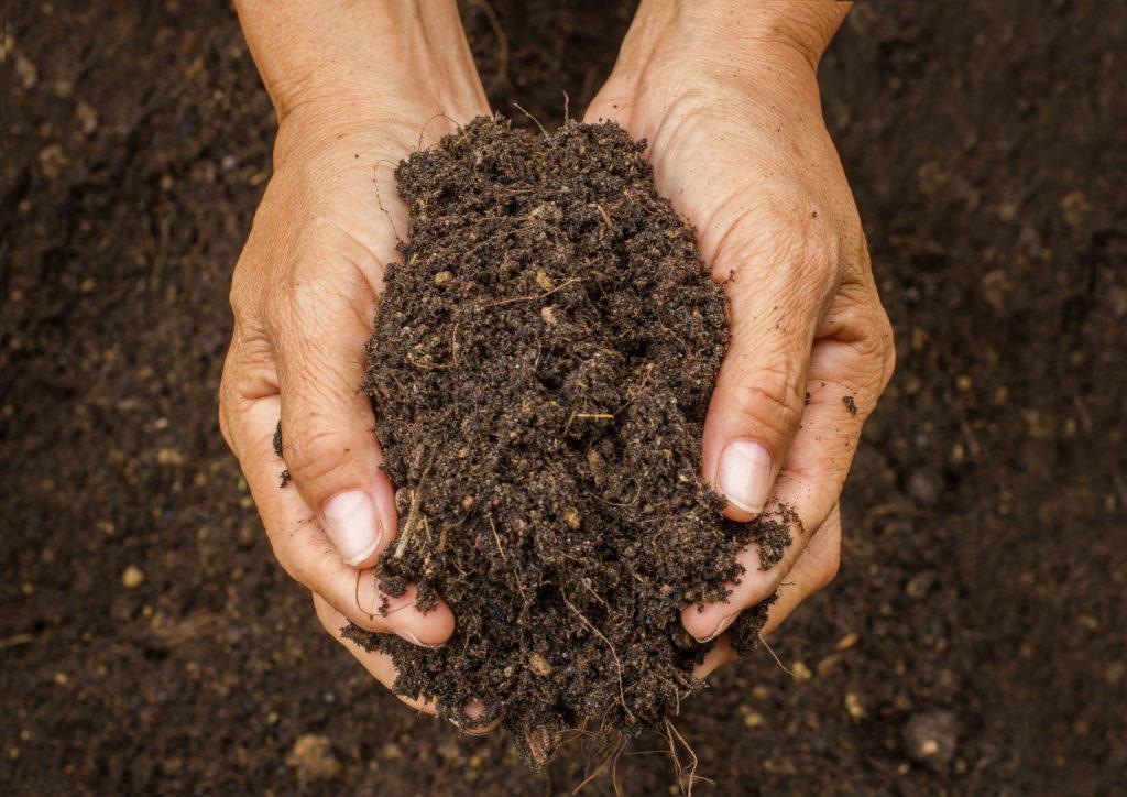 Hände halten frische Gartenerde