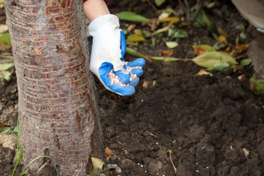 Kirschbaum düngen mineralischer Dünger Handschuhe