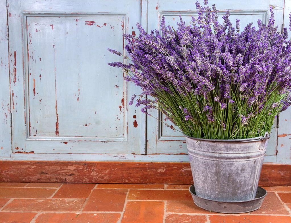 Lavendel in einem Topf auf einem Fliesenboden