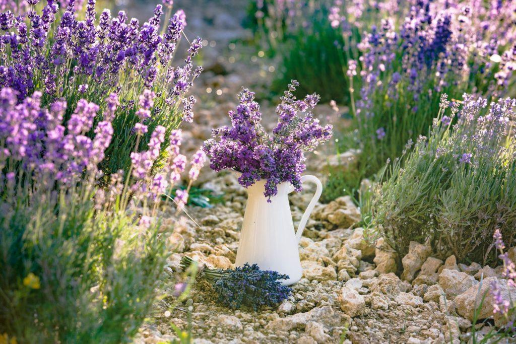 Lavendel Beet mit Kanne