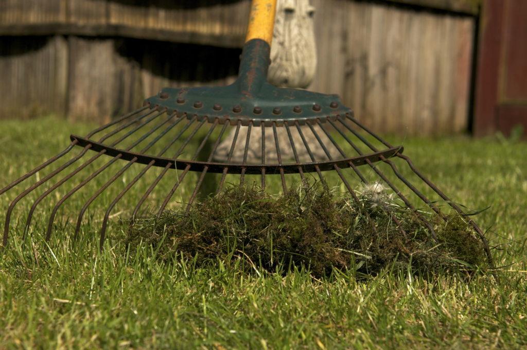 Rasen wird von Moos entfernt