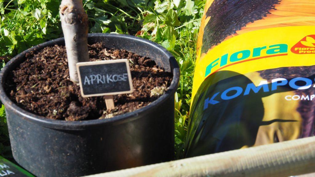 Nahaufnahme Aprikosenbaum mit Schild im Container