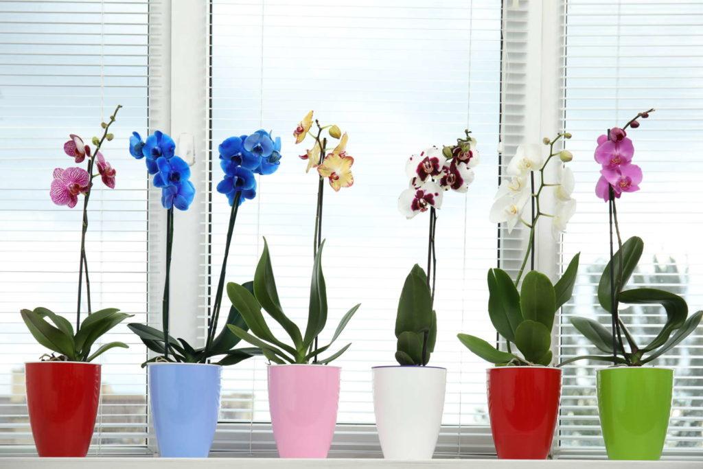 Orchideen am Fensterbrett