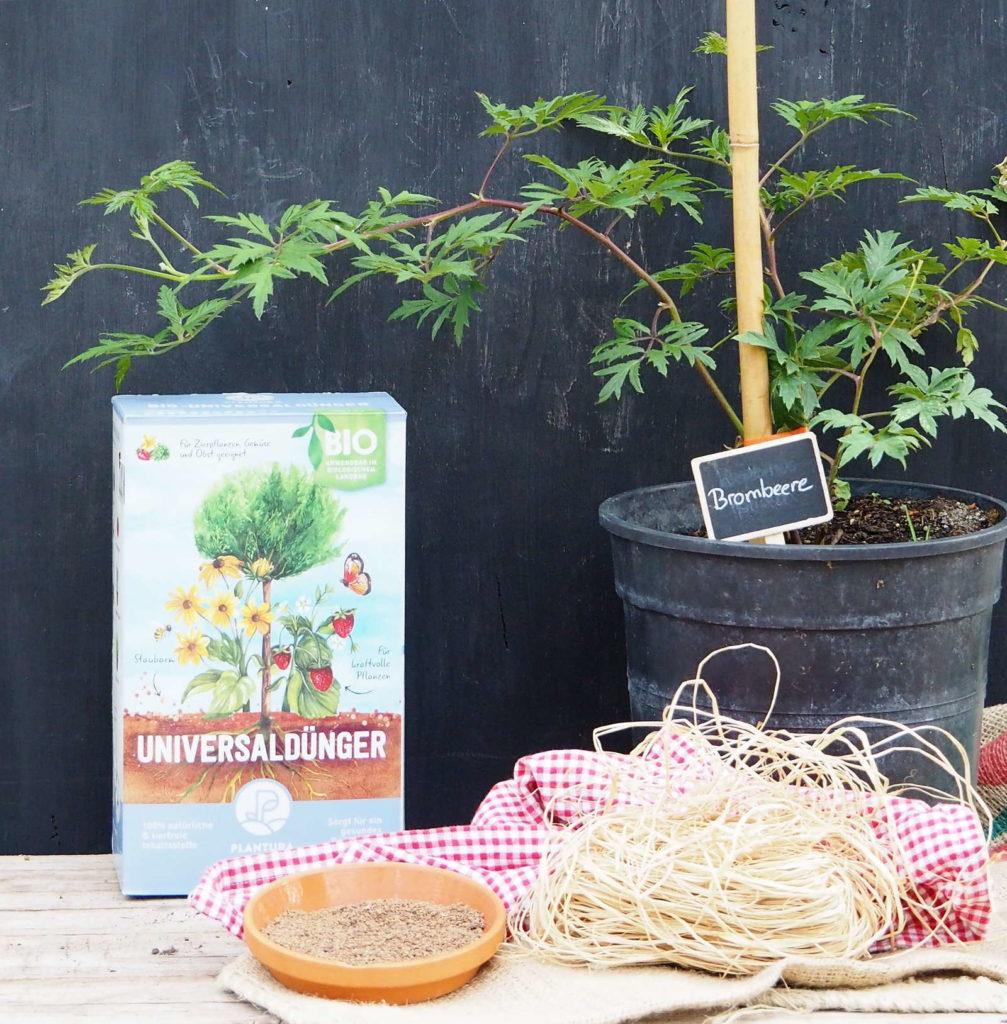 Brombeerstrauch mit Plantura Dünger
