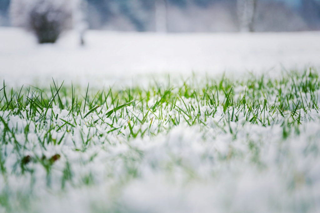 Rasen im Schnee nah