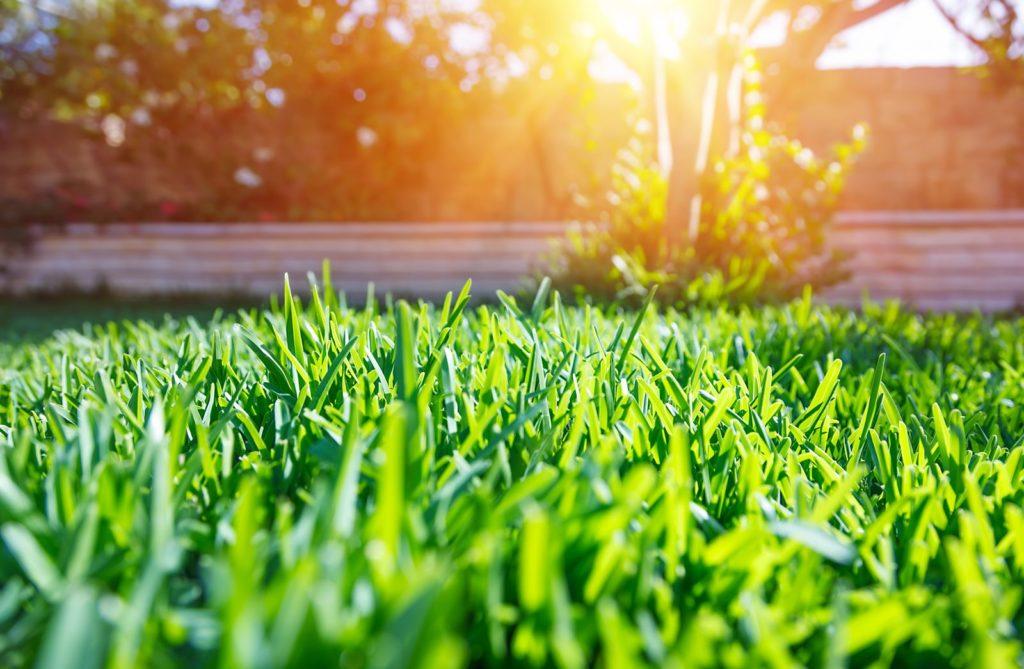 Rasen im sommer
