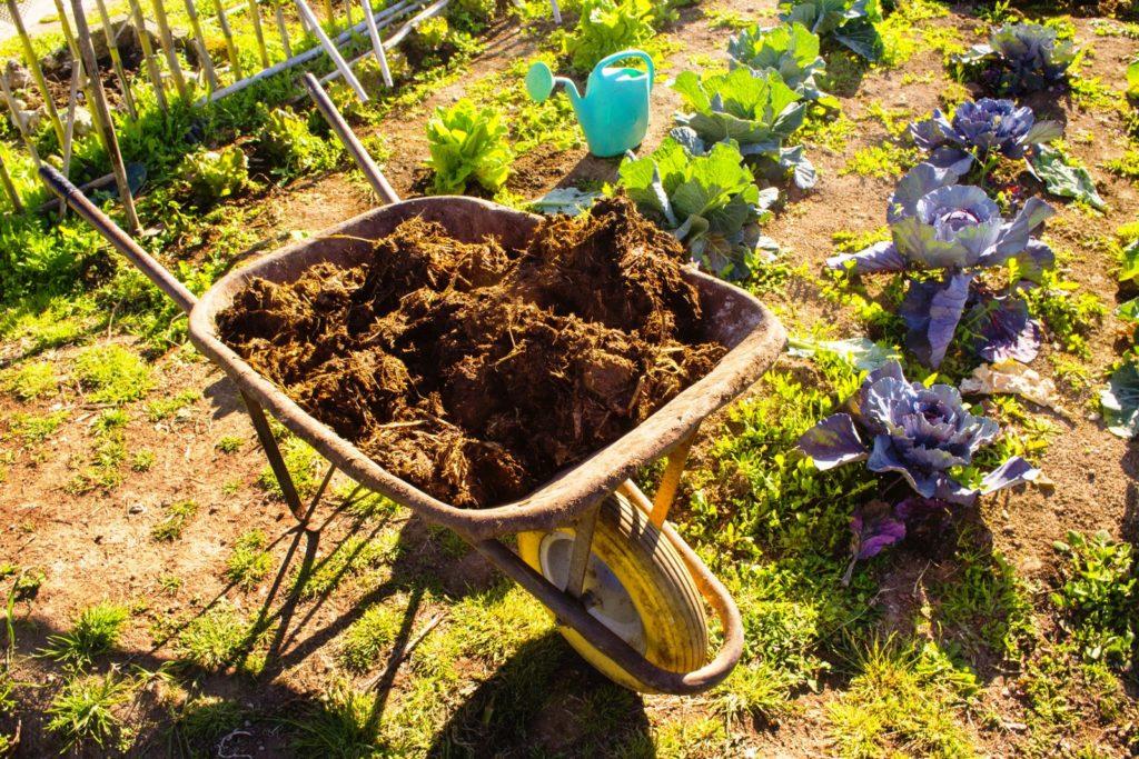 Schubkarre mit Mist im Garten