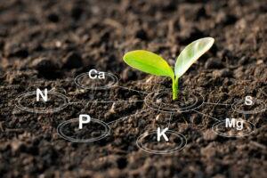 Junge Pflanze In Erde